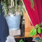En la floristeria Urbion (4)