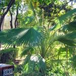 Jardines de Murillo  (1)