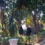 Jardines de Murillo  (12)