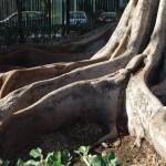 Jardines de Murillo  (13)