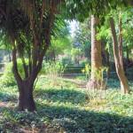 Jardines de Murillo  (17)
