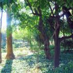 Jardines de Murillo  (3)