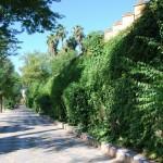 Jardines de Murillo  (4)