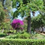 Jardines de las Delicias  (1)