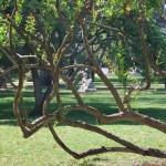 Jardines de las Delicias  (11)