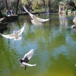 Parque  de Maria Luisa (24)