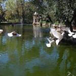 Parque  de Maria Luisa (25)