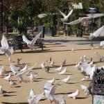 Parque  de Maria Luisa (55)