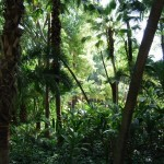 Parque  de Maria Luisa (56)