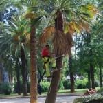 Parque  de Maria Luisa (61)