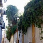 Sevilla. Antigua Juderia (De Plza. Zurradores a Igl. Santiago) (17)