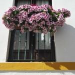 Sevilla. Barrio de Santa Cruz  (14)