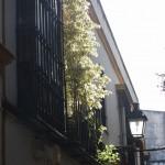 Sevilla. Barrio de Santa Cruz  (24)