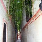 Sevilla. Por la Juderia (10)